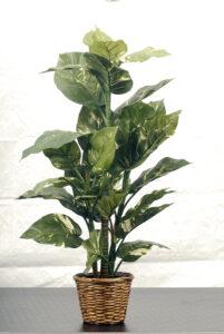 4' Tropical Plant