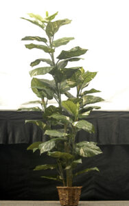 6' Tropical Plant